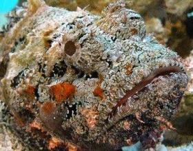 Подводный мир красного моря опасен и